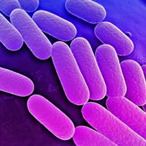 Superbactérias: Desafio da Medicina Moderna