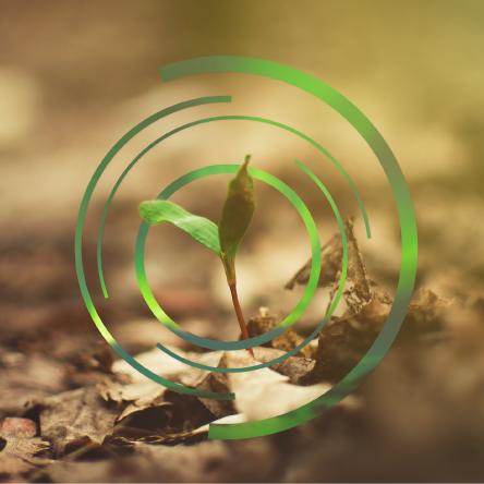Meio ambiente em foco – problemas e resoluções